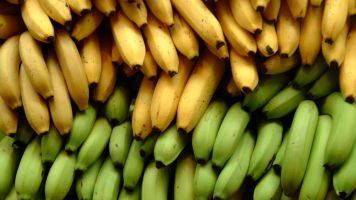 This Fungus Is Bad News For The World's Bananas
