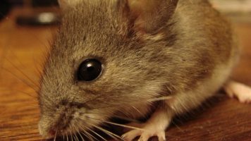 How Mouse Embryos Showed Scientists Reproduction Is Possible In Space