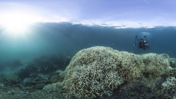 We're Killing Coral Reefs Faster Than Ever