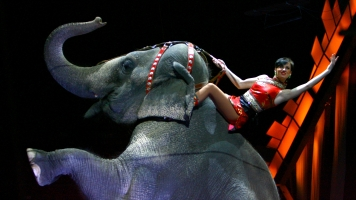 Ringling Bros. Elephants Quit Showbiz, Join The Fight Against Cancer