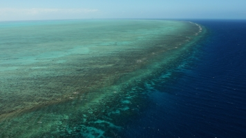 The Great Barrier Reef Is Dying, And Tourists Are Rushing To See It