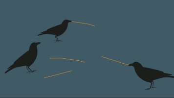 Crows Learn To Use Tools When There Aren't Woodpeckers In The Way