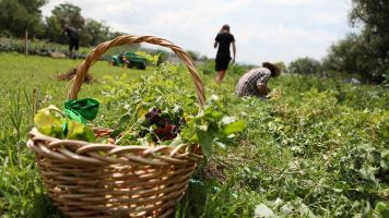 Scientists Could Be Closer To Increasing Global Food Productivity