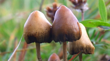 Magic Mushrooms Could Help Treat Severe Depression And Anxiety