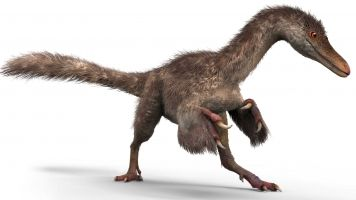 In Case You Forgot, Dinosaurs Were Actually Feathery