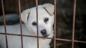 200 Dogs And Puppies Rescued From Dog Meat Farm In South Korea