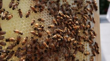 Backing Off These Pesticide Restrictions Could Be Bad For Bees