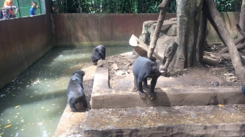 Indonesia's Zoos That Aren't 'Decent' Still Might Not Close