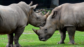 Poachers Broke Into A French Zoo And Killed A Rhino For Its Horns