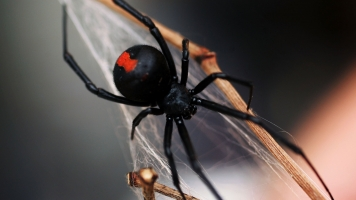 There's Nothing Itsy Bitsy About The Number Of Bugs Spiders Eat