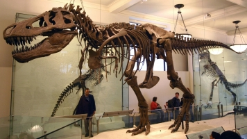 New Theory Turns 130 Years Of Dinosaur Doctrine On Its Head