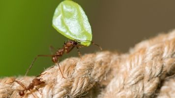 Ants Have Been Running Sophisticated Farms For 30 Million Years