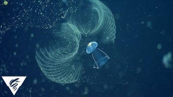 Filter-Feeding Plankton Clean Carbon Out Of The Oceans