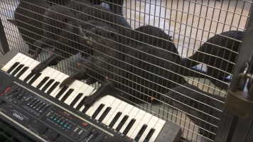 Music Keeps The Mind Sharp — Even If You're An Animal In A Zoo