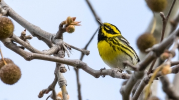 Climate Change Is Screwing Up Birds' Migratory Patterns