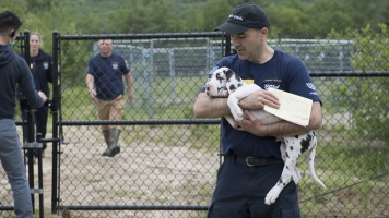 84 Great Danes Rescued From 'Squalid' Puppy Mill