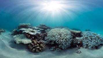 The Worst Coral Bleaching Event Ever May Be Over: Now For The Bad News