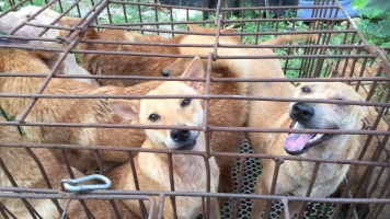 Despite Ban Rumors, The Yulin Dog Meat Festival Is Still Happening