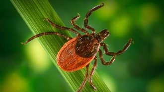 More Ticks Means More Tick-Borne Diseases This Summer