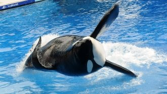 SeaWorld Is Being Investigated For Its Response To 'Blackfish'