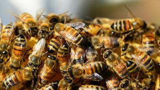 Scientists Finally Know How One Common Pesticide Is Harming Our Bees