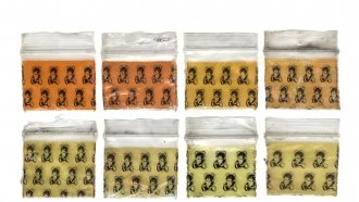 Dime A Dozen: Turning Discarded Drug Bags Into Art