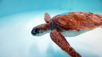 Scientists Say Too Many Sea Turtles Are Born Female — Here's Why