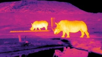To Save Endangered Animals, We're Learning To See Them In The Dark
