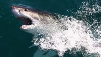 US Senators Learn How Sharks Might Help Cure Cancer