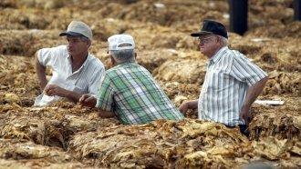 Carolina Farmers Race To Save Crops, Farmland Before Florence Hits