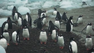 Scientists Say Antarctic Animals May Not Be Safe From Human Pathogens