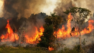 Fire near grazing land in the Amazon basin