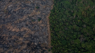 Aerial image shows rainforest destruction and land clearing from fires.