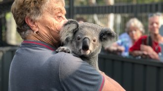 Australian Hospital Rescuing Koalas From Historic Bushfires
