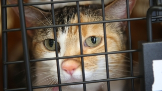 A cat sits in its crate before boarding a plane
