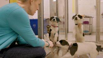 Tori Fulgate with dogs