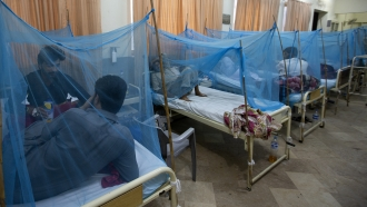 People suffering from dengue, a mosquito-borne disease, rest in a hospital in Rawalpindi, Pakistan, Thursday, Oct. 3, 2019