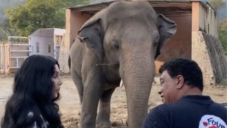 American pop start Cher and Dr. Amir Khalil, a veterinarian with Four Paws International, with Kaavan, the elephant.