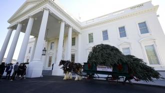 White House Christmas tree on cart