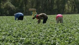 Men work in a field.