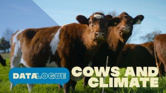 How To Shrink Cows' Huge Carbon Footprint
