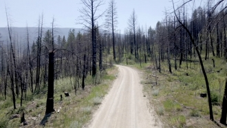 Sediment Samples Show Wildfires Are Getting Worse