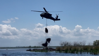 Black Hawk helicopter drops recycled fir trees into the Bayou Sauvage National Wildlife Refuge.