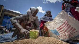Ethiopian woman scoops portions of wheat to be allocated to waiting families in the Tigray region.