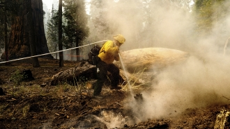 A firefighter hoses down a hot spot in Sequoia National Forest, California.