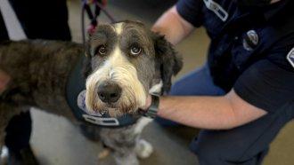 Firefighter pets a dog.