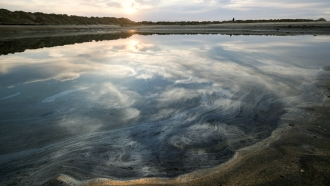 Oil floats on the water surface after an oil spill