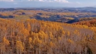 Rolling hills of trees with leaves changing colors as the season transitions into autumn.