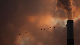 A flock of geese fly past a smokestack at a coal power plant