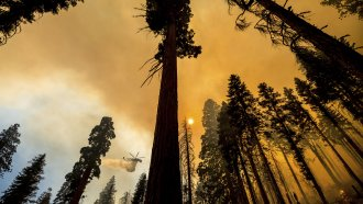 A helicopter drops water on the Windy Fire burning in the Trail of 100 Giants grove of Sequoia National Forest.